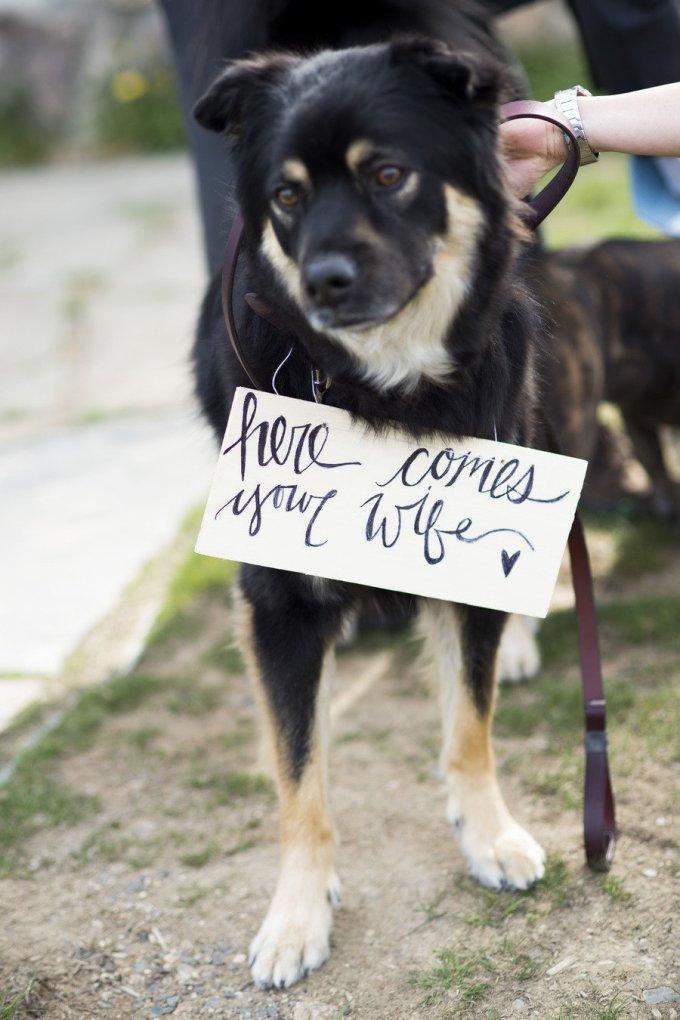 Wedding Broker dog1