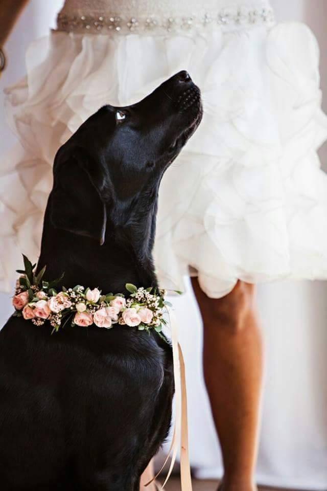 Wedding Broker dog11