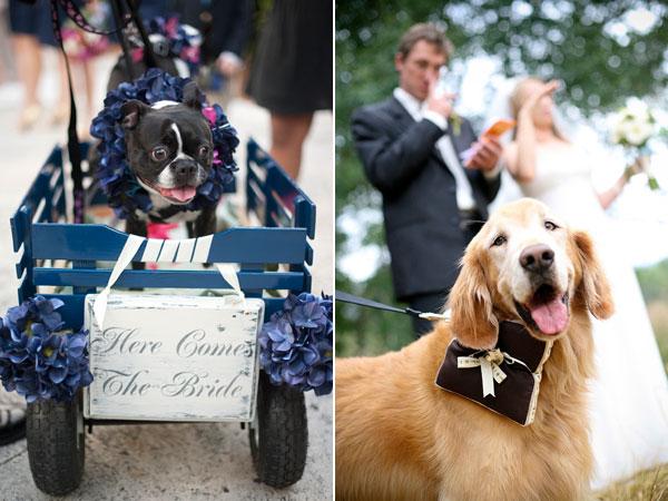 Wedding Broker dog12