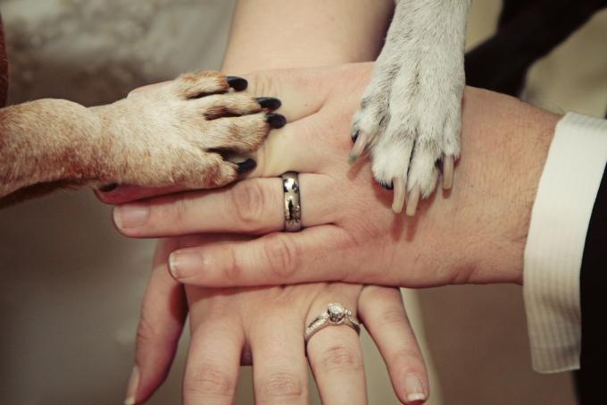 Wedding Broker dog13
