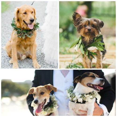Wedding Broker dog14