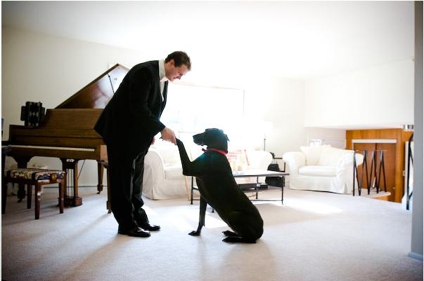 Wedding Broker dog16