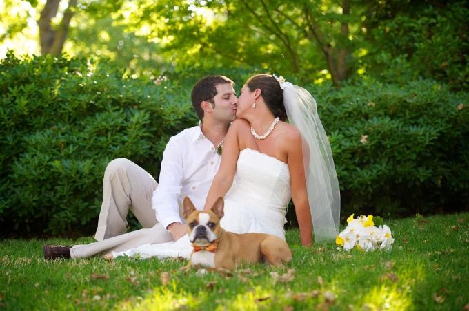 Wedding Broker dog17