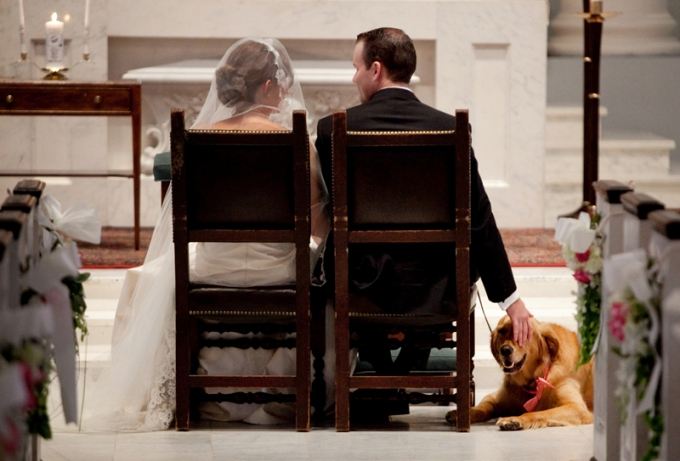 Wedding Broker dog18