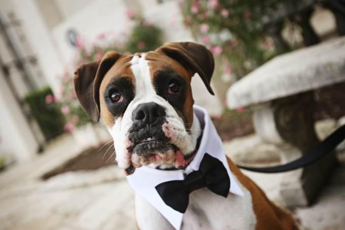Wedding Broker dog2