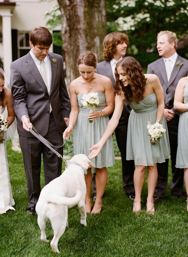 Wedding Broker dog20