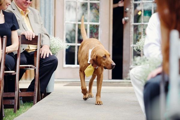 Wedding Broker dog21