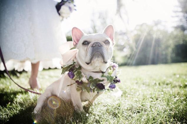 Wedding Broker dog22