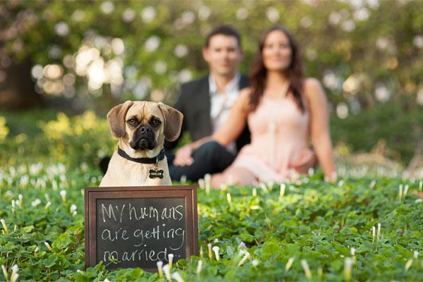 Wedding Broker dog23