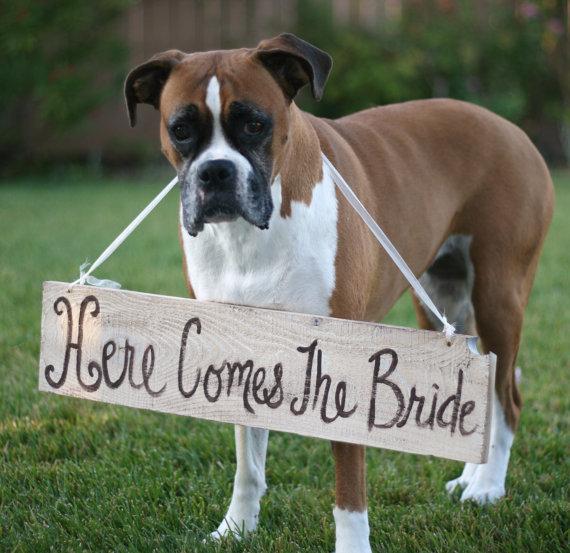 Wedding Broker dog25