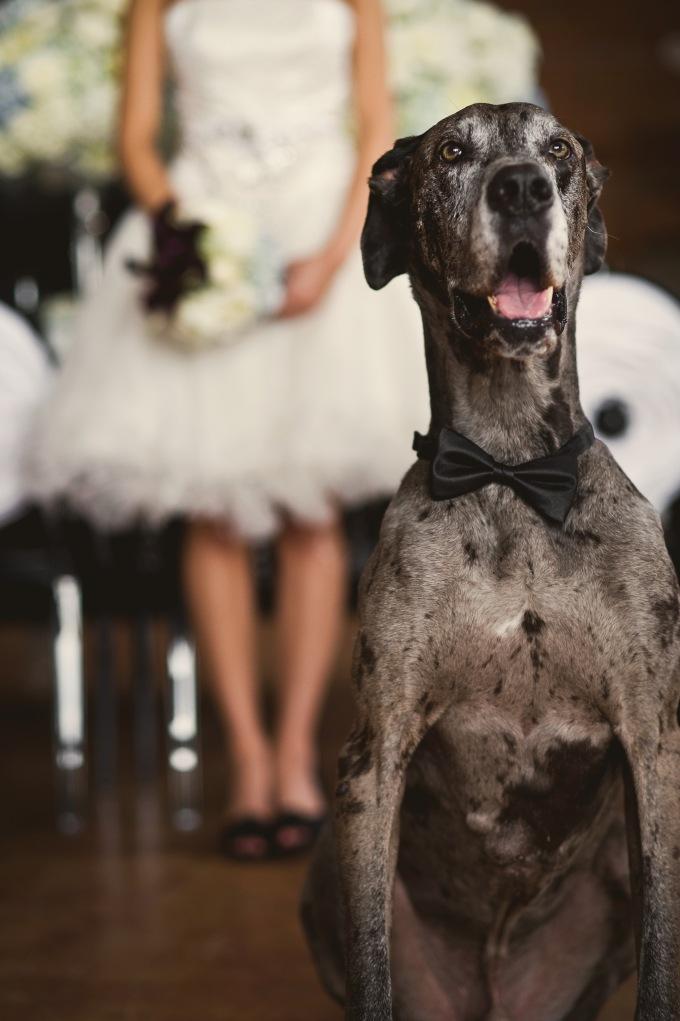 Wedding Broker dog26