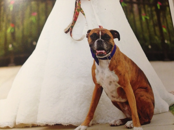 Wedding Broker dog27