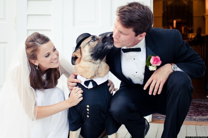 Wedding Broker dog29