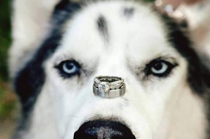 Wedding Broker dog3