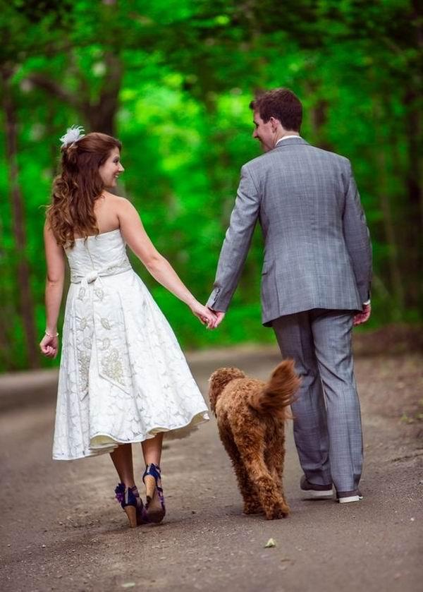 Wedding Broker dog30