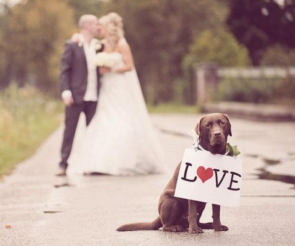 Wedding Broker dog31
