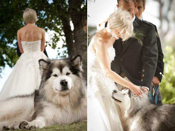 Wedding Broker dog32
