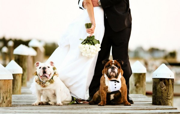 Wedding Broker dog33