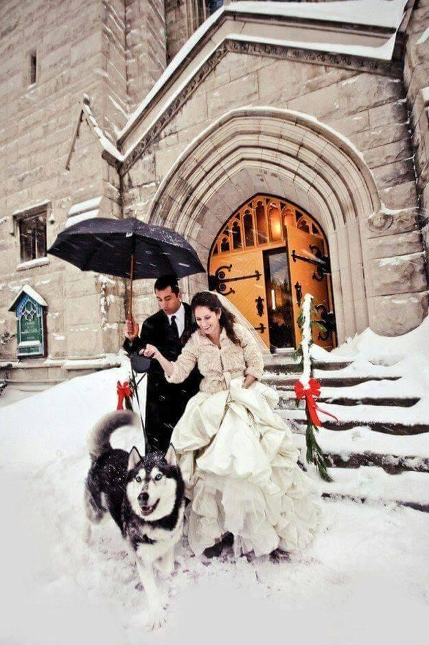 Wedding Broker dog4