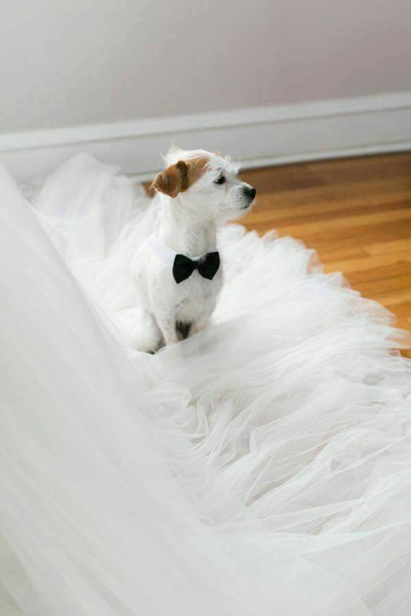 Wedding Broker dog6
