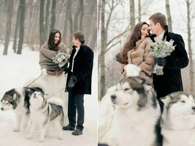 Wedding Broker dog8