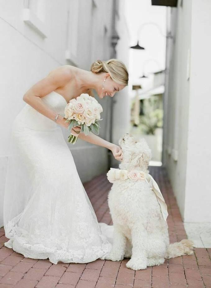Wedding Broker dog9