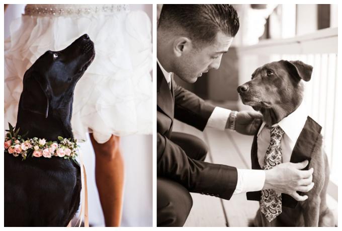 wedding-dog-getting-ready